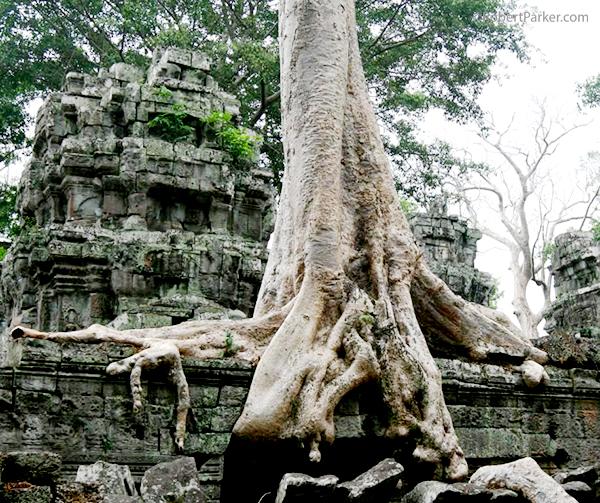https://robert-parker-content-prod.s3.amazonaws.com/media/image/2016/09/13/0b37d261cc6c4a65ac50e339326ab196_Angkor+lava+tree.jpg