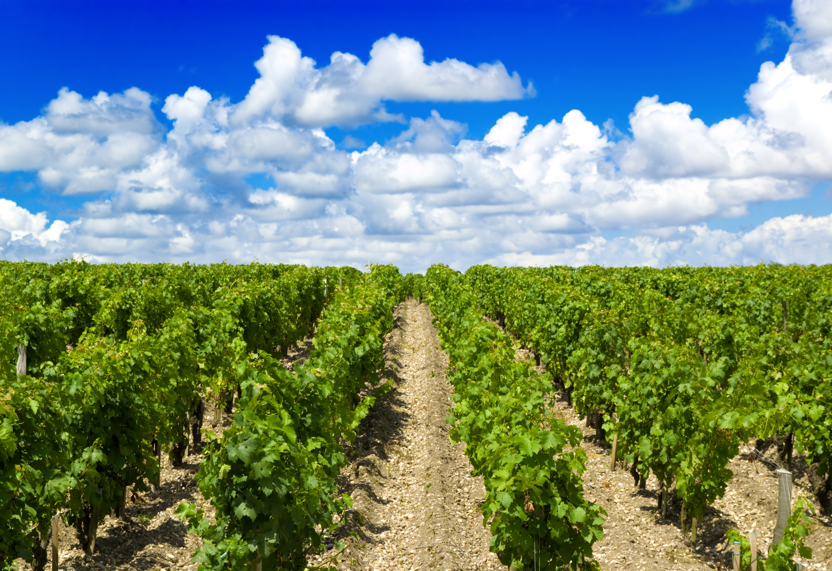 https://robert-parker-content-prod.s3.amazonaws.com/media/image/2017/02/28/f1bc79bc3d454562821e59b48f554abd_Bordeaux+Vines.jpeg
