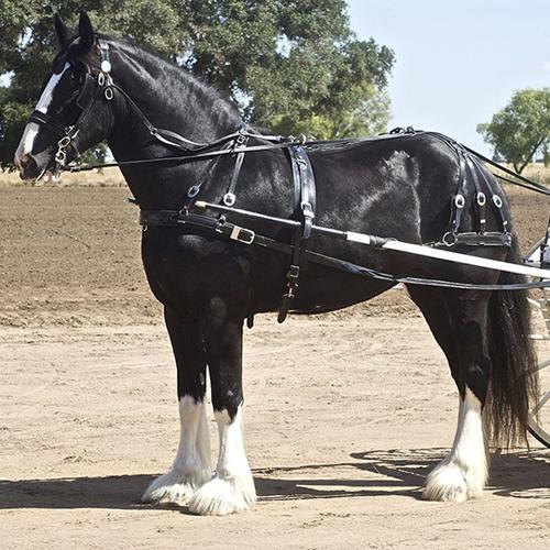 https://robert-parker-content-prod.s3.amazonaws.com/media/image/2017/04/25/aa36ed039c59453088736738cec7019d_shire+horse_final.jpg
