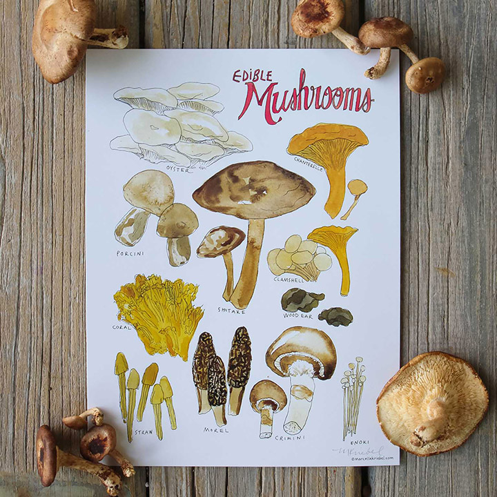https://robert-parker-content-prod.s3.amazonaws.com/media/image/2018/12/07/68c7f6156f3243cfae80b8ea12b8d259_Marcella-Kriebel_Edible-Mushrooms-square-INLINE.jpg
