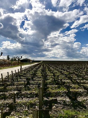 https://robert-parker-content-prod.s3.amazonaws.com/media/image/2019/01/04/70bd2e1b7527487d9fd061aaf73c5cdf_Bordeaux+2017+-+Latour+vineyard+-+FINAL.jpg