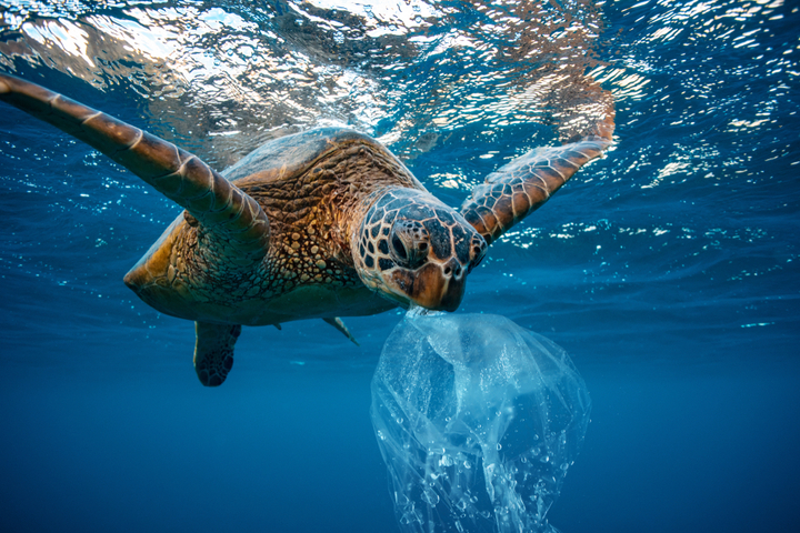 https://robert-parker-content-prod.s3.amazonaws.com/media/image/2019/04/19/aa4da97b2b154f64a16a214b4138ac09_sea_turtles_earth_day_shutterstock_INLINE.jpg