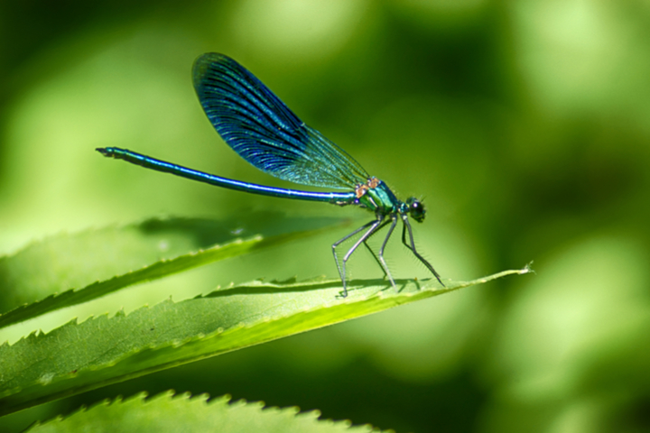 https://robert-parker-content-prod.s3.amazonaws.com/media/image/2019/04/19/e94484e9bcce4649a516cc314e09c61f_insects_earth_day_shutterstock_INLINE.jpg