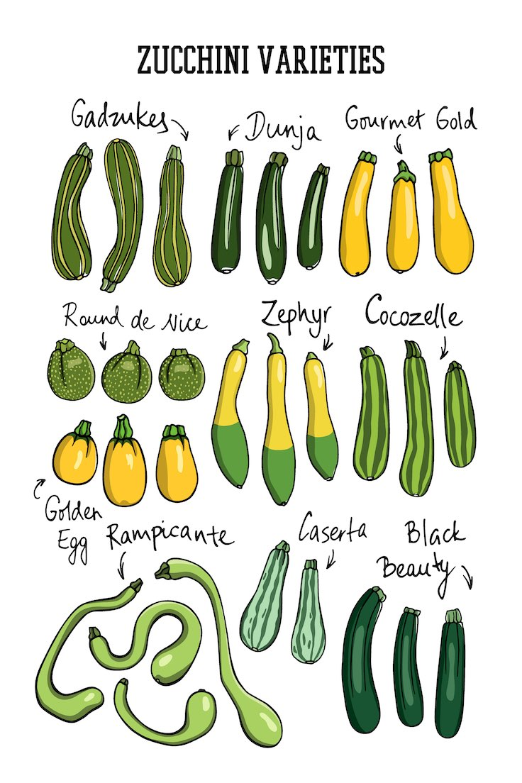 https://robert-parker-content-prod.s3.amazonaws.com/media/image/2019/06/24/53dab7c19b70459db67d25e127275027_shutterstock-zucchini-varieties-INLINE.jpg